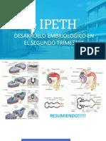 DESARROLLO DEL SISTEMA NERVIOSO CENTRAL 2 TRIMESTRE- Copy (1)1.pptx