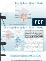 The Digestive System- How It Works
