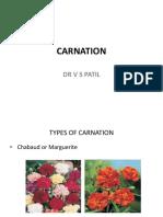 Carnation - Copy