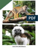 Mono Con Anteojos