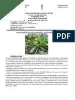 Protocolo Zucchini