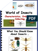 World of Insects.ppt