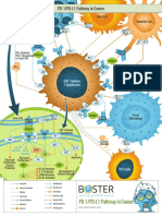 PD1-PDL1 pathways in cancer