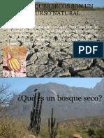 Bosques Secos.pptx