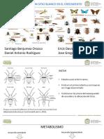 Insecticidas Con Sitio Blanco en El Crecimiento