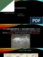 Diapositivas de Microbiologia.