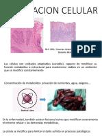 Adaptación Celular.pptx