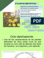 reinoplanta-091115143715-phpapp02