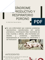 PRRS Síndrome Reproductivo y Respiratorio Porcino