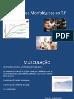 Adaptações Morfológicas Ao Treinamento de Força