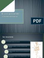 Diseño General Del Sistema Nervioso