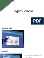 Imagem- crânio.pdf