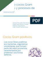 Cocos Gram positivos y procesos de autolisis