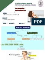Sistema_Digestivo__Clase_1_Dr._Barón.pdf