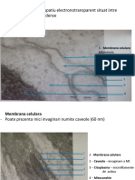 LP 3 Structuri celulare RO.pdf