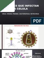 4. virus