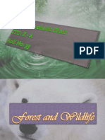 Forest and