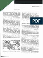 Granulomatózus gyulladások