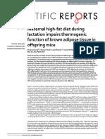 Maternal High-fat Diet During,LIANG,2016