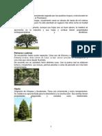 Especies de Arboles de Guatemala