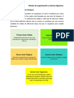Niveles de Organización y Sistema Digestivo