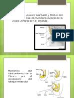 Uraco Embriología.pptx