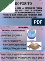 Citoplasma - Organelos II