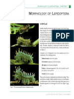 Lepidoptera Morphology