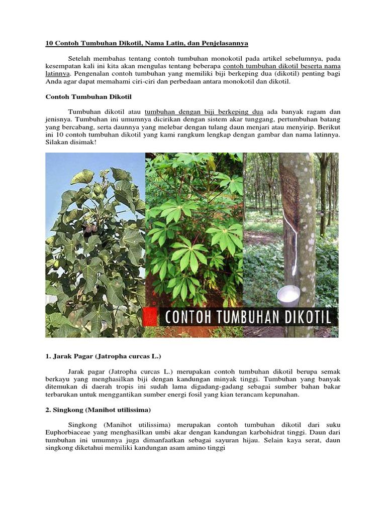 10 Contoh Tumbuhan Dikotil