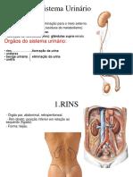 aPARELHOGENITOUrinário.pdf