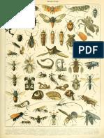 Adolphe_Millot_insectes_B.pdf