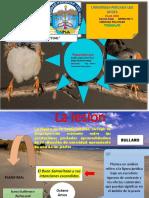 Lesion Contractual Lister