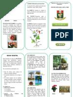 PLANTAS2.docx