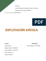 Informe Explotacion Avicola