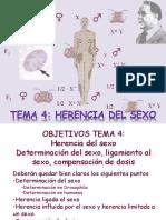 documents_genetica_gen_Tema 4 Herencia del sexo201337-197.ppt