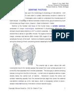 5 Dentin Factoid