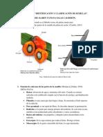 Taller Aa1-Ev2 Identificación y Clasificación de Semillas