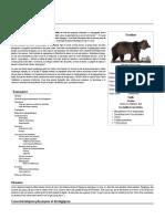Ursidae.pdf
