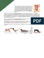 Musculos Del Tronco Resumen