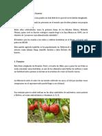 Siembra de Hortalizas Caseras - 2019