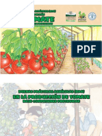 BPA Tomate en Invernaderos