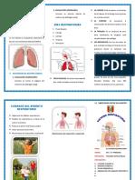Triptico Sistema Respiratorio