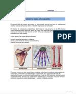 osteologia dibujos