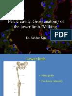 20151116 0900 Katz Sandor Eng Pelvis Gross Anatomy of the l