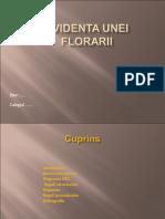 Flora Rie