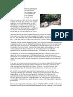proyectos ecologicos