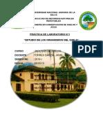 Estudio de los organismos del suelo.docx