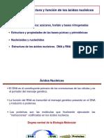tema-14_acidos-nucleicos.pdf
