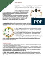 Ciclo de vida de las plantas gimnospermas y angiospermas.docx