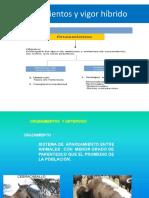 Cruzamientos_y_vigor_hibrido.pdf